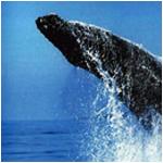 Whale watching, Kwa-Zulu Natal